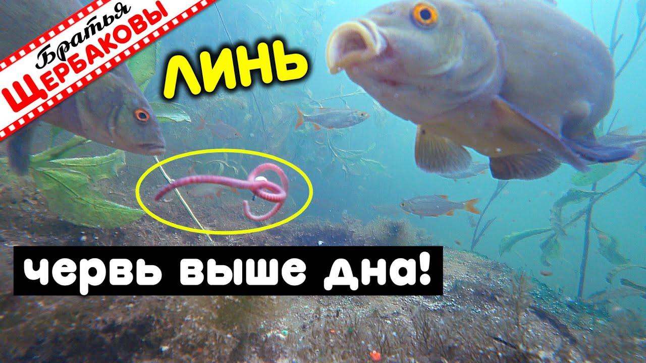 ЛИНЬ. Наживка НА ДНЕ или НАД ДНОМ? Что лучше? Подводные съемки
