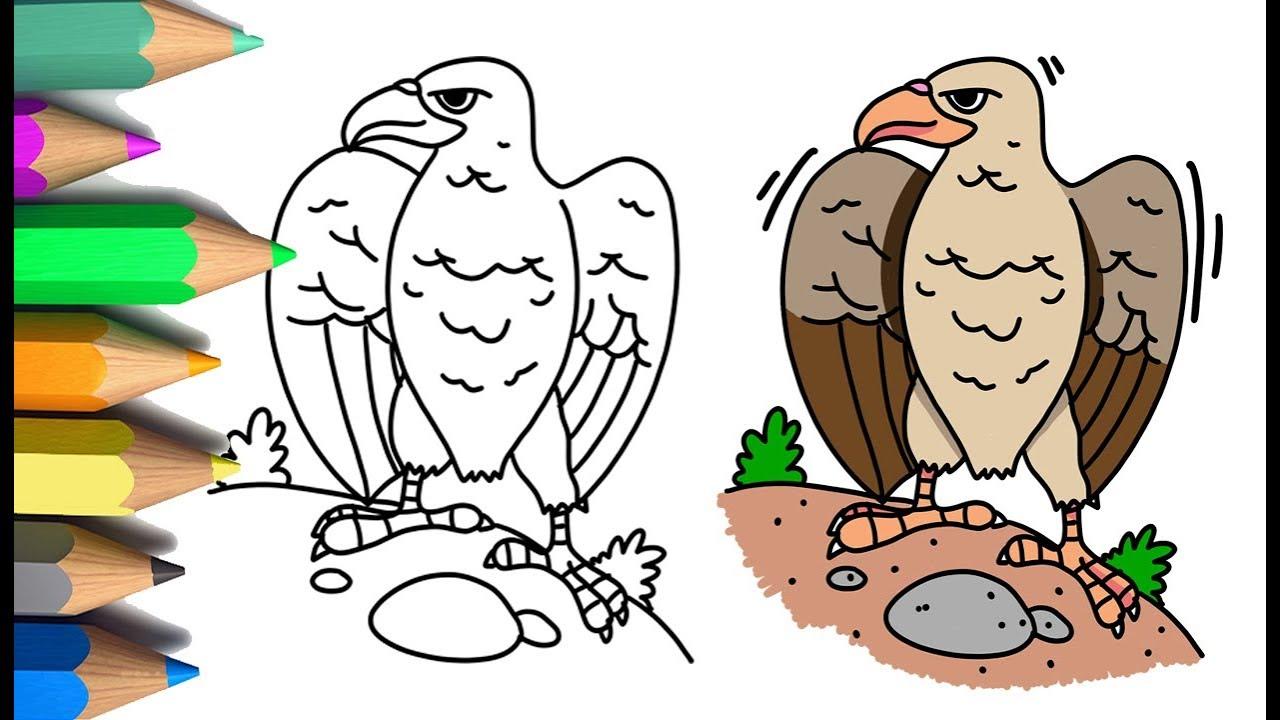 Menggambar Dan Mewarnai Burung Elang 🦅 Mewarnai Gambar