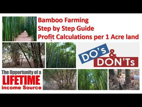 Bamboo Farming II A to Z guide II Soil II Irrigation II Climate II Harvesting II Profit Calculations
