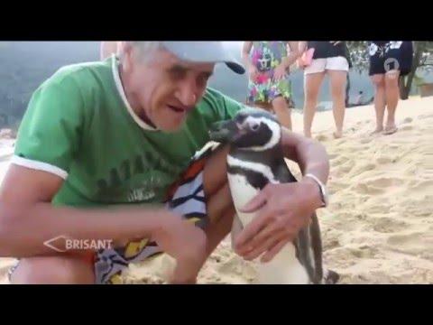 Pinguin besucht alljährlich seinen Lebensretter (11.03.2016 ARD-BRISANT)
