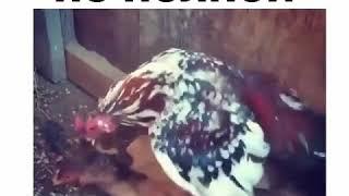 секс смех
