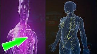 Del linfático vaso médica definición