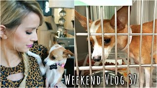 Adopting My Dog Baby! | weekend vlog 37