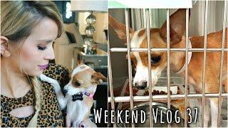 Adopting My Dog Baby! | weekend vlog 37