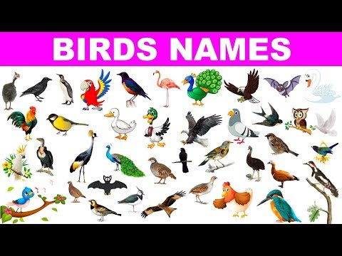 Birds Name in English & Hindi With Pictures | Different types of Birds | पक्षीयों के नाम