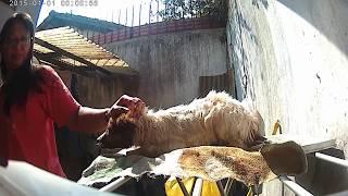Download Video Cila Mandi MP3 3GP MP4
