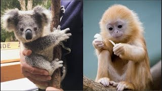 Funny Animals Compilation - Cutest Animals Ever thumbnail