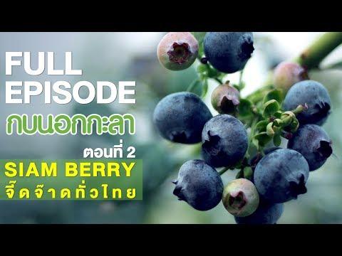 SIAM BERRY จี๊ดจ๊าดทั่วไทย (2) - Full - วันที่ 24 Feb 2018