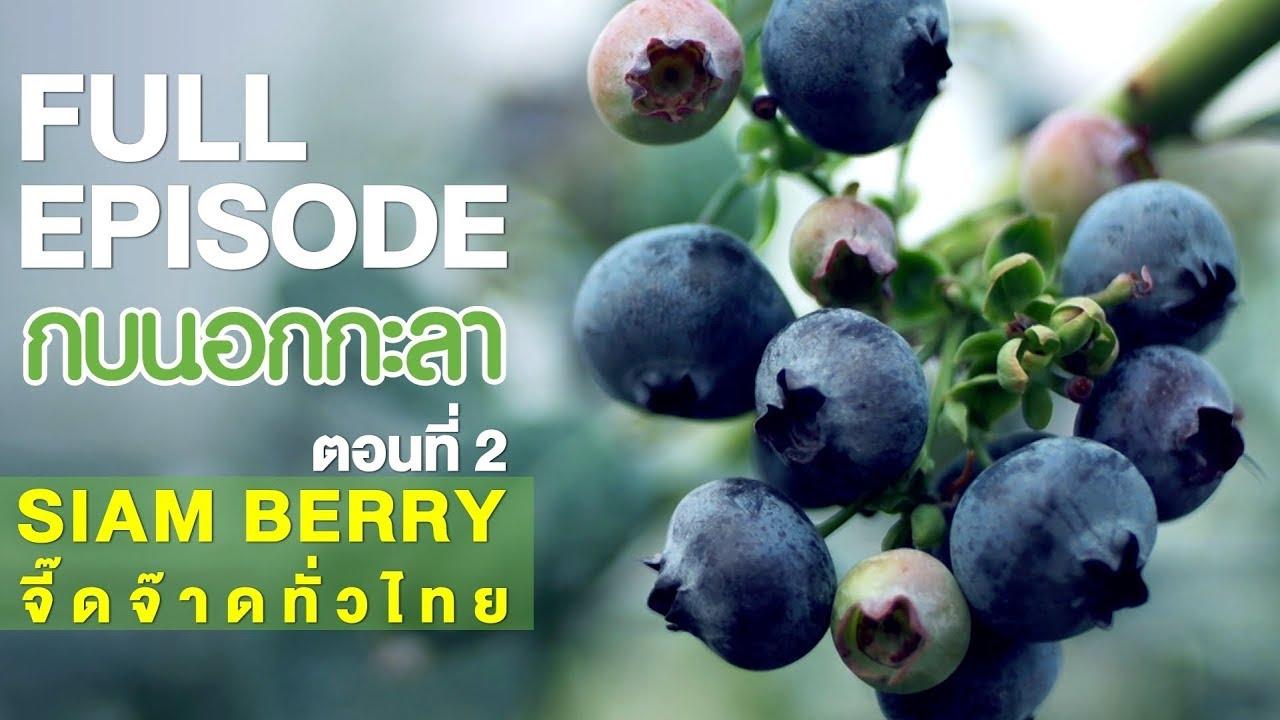 กบนอกกะลา : SIAM BERRY จี๊ดจ๊าดทั่วไทย (2) | FULL (22 ก.พ.61)