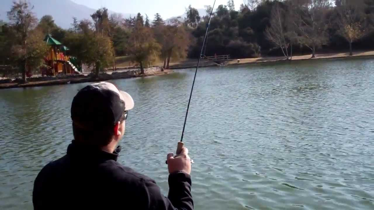 Big trout lost yucaipa regional park lake thomas cyclone for Yucaipa regional park fishing