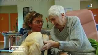 Rencontre avec le chien Lupin de l'association handi'chiens