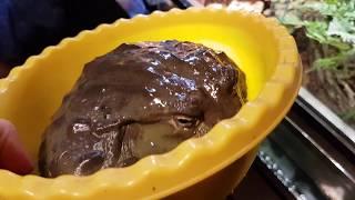 Видео про то, как гигантские лягушки какают. Ура, какашки!