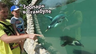 Зоопарк в Стамбуле / Настоящиий пингвин и огромная черепаха
