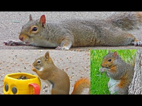 STUNNING Videos for Cats to Watch - Beautiful Birds, Squirrels, Rabbits, Chipmunks, Pigeons,