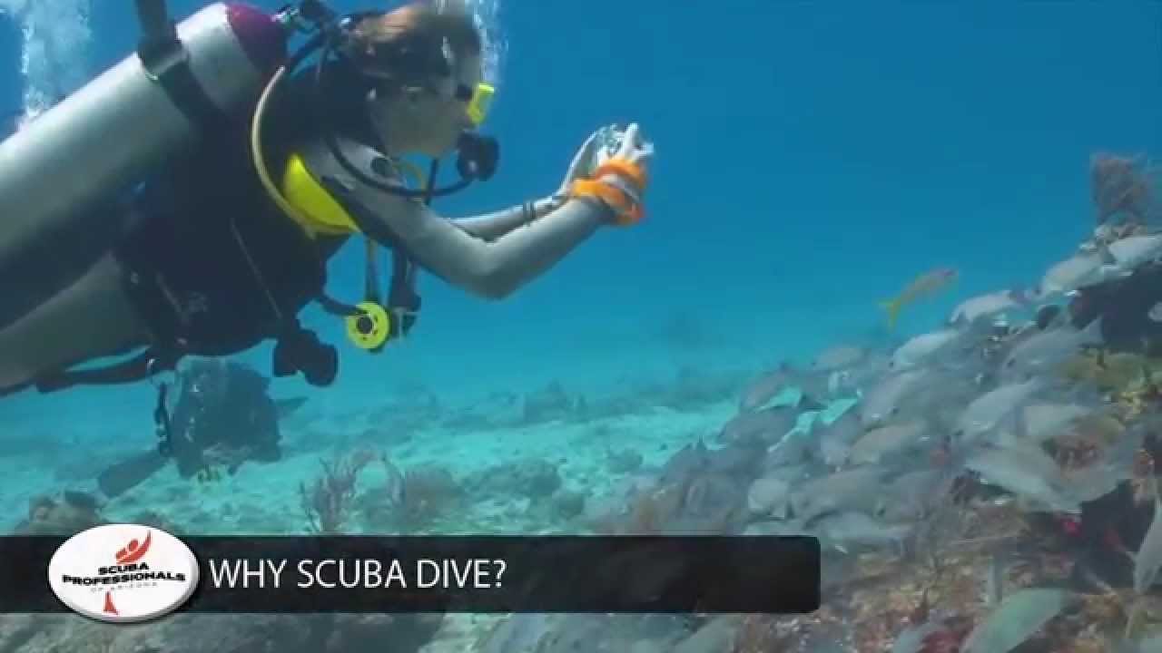 Why You Should Start Scuba Diving With Scuba Professionals Of