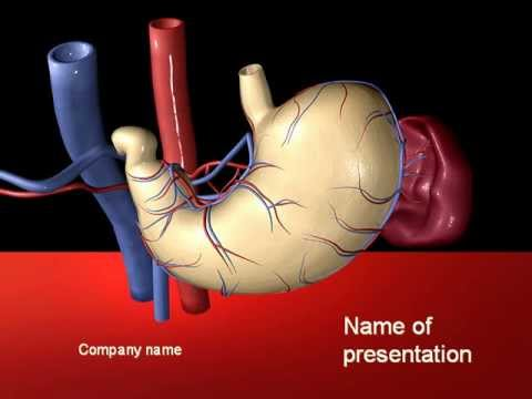 Digestive system powerpoint template youtube digestive system powerpoint template toneelgroepblik Image collections