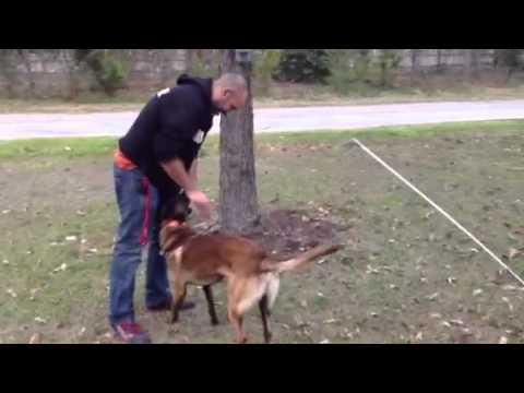 Attention training with a Dog Trophy reward machine. Houston Sit Means Sit(281) 912-3647