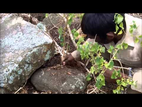 Trailer: Confessions Of A Tiger Poacher