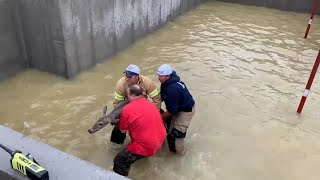 Firefighters Rescue Deer From Flooded Basement After Rainstorm