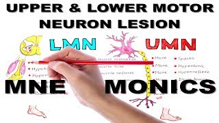 Upper & Lower Motor Neuron Lesions / Mnemonic series #5