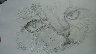 рисование лица кошки карандашом