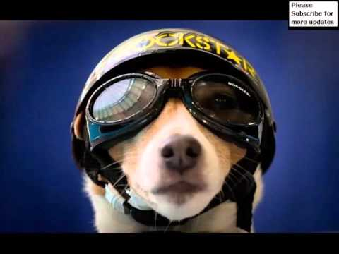 724454f3f1eba Dog Goggles And Helmets Set Of Useful Picture Ideas