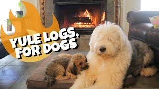 Old English Sheepdog enjoying Yule Log┃Ed&Mel