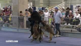 Cali K9 Puppy Training With Jasper- Dog Expo 2010 - San Jose Dog Training #calik9