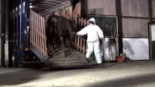 Amersham horse case eye witness account