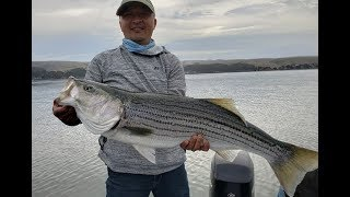 Tomales Bay Fishing for Huge Stripers
