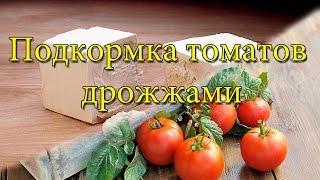 Богатый урожай круглый год: подкормка помидор дрожжами в теплице