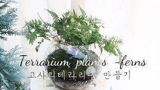 테라리움 고사리 식물과 이끼 꾸미기 terrarium …