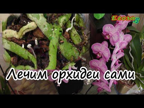 ГРИБЫ в горшке с ОРХИДЕЕЙ/ ЛЕЧЕНИЕ простой способ