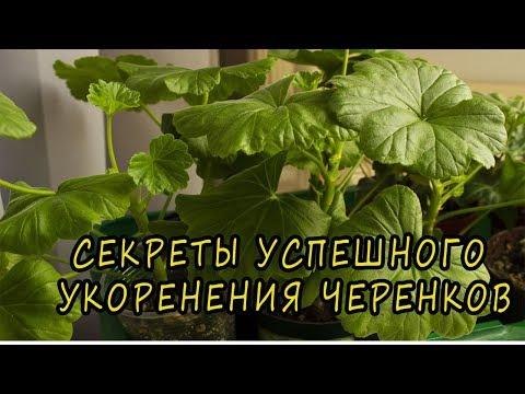 Секреты успешного укоренения комнатных растений. �� [Надежда и мир]
