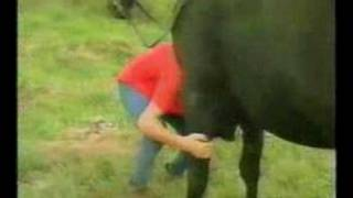 סוס מחרבן על משהי