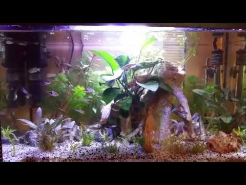 Mon 1er aquarium 100% plante naturelle