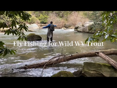 Fly Fishing For Wild WV Trout