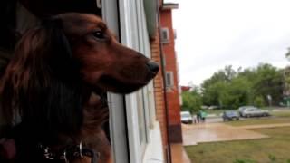 \Клип Чарлика\ Собака видеоблогер\