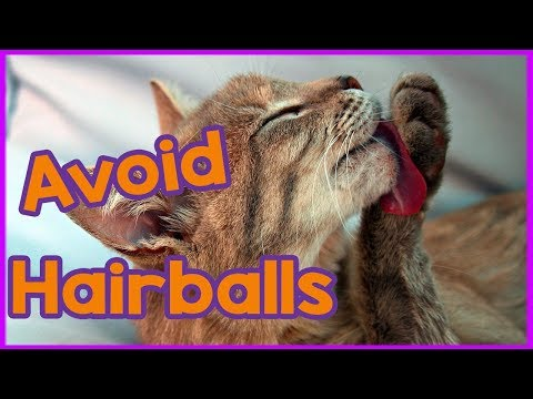 How to Avoid Cat Hairballs!