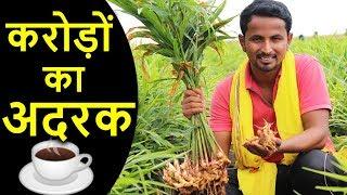 करोड़ों की अदरक खेती   Biggest Ginger Farming in India   AgriBusiness Success Story
