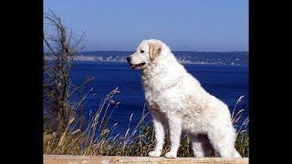 世界でトップ10の最も美しい犬の品種 私たちの編集が好きなと思っていま...