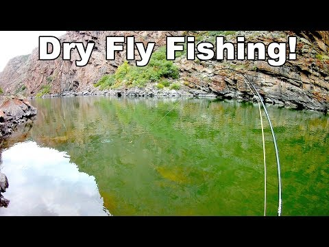 Gunnison River Dry Fly Fishing - Beautiful Wild Trout - Black Canyon - McFly Angler Episode 27
