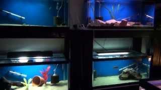 Fish Room Update 7.6.13