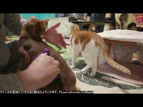2018.3.2猫部屋ライブ映像   Cats & Kittens room 【Miaou みゃう】