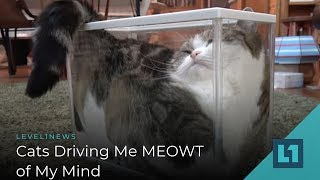 Level1 News February 8 2019: Cats Driving Me MEOWT of My Mind
