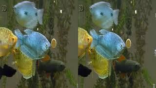 VR 3D фильмы - Аквариумные рыбки в 3D - Документальное кино в 3D