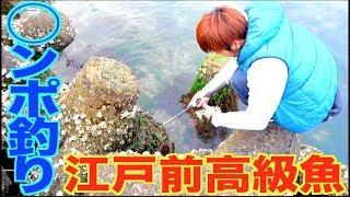 江戸前の高級魚!1年ぶりの◯ンポ釣り!!
