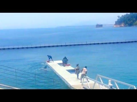 Ocean Adventure Dolphins