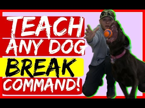 How to teach your dog to break during training - Using the Break Command for Dog Training