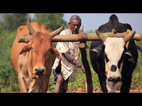 EBL-Nexus Project: Rainfed Agriculture in the Ethiopian Highlands